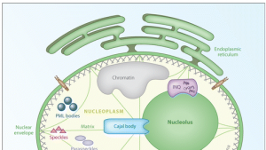 A comprehensive review about protein degradation in the nucleus. Published in the 'Annual Review of Biochemistry'