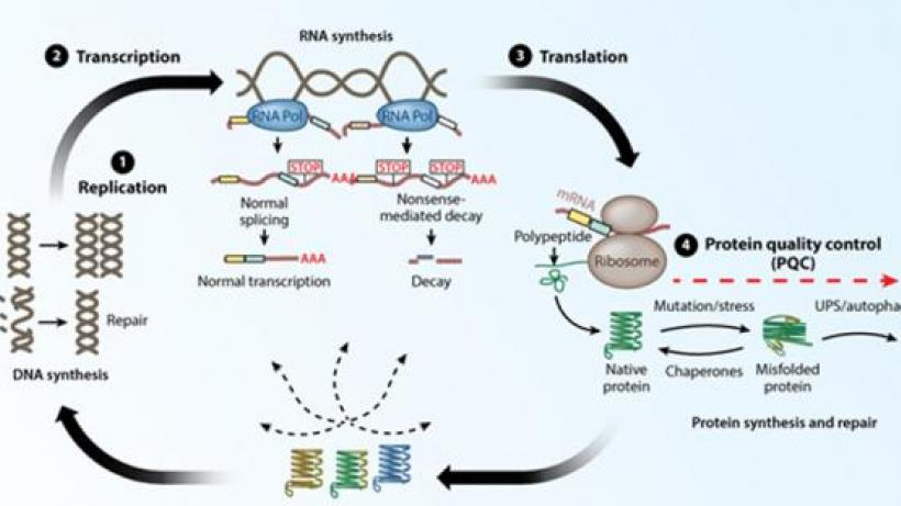 Quality Control Pathways in aukaryotes